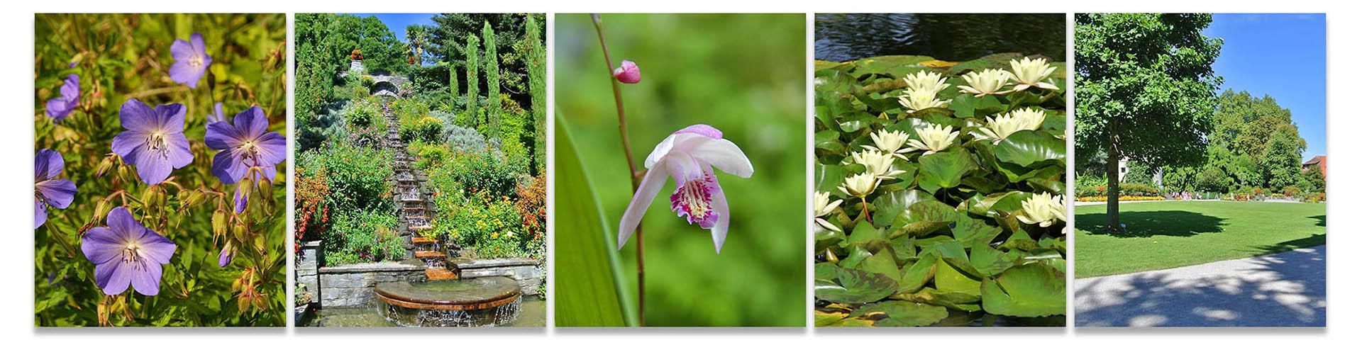 gartenblog.merz-im-web.de – Tipps und Tricks für die Gartenpflege